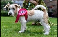 Британский премьер привел в резиденцию на Даунинг-стрит щенка из приюта