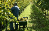 Рада спростила малим виноробам отримання ліцензії