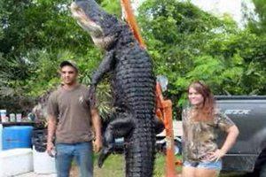 Американец поймал на удочку 360-килограммового аллигатора
