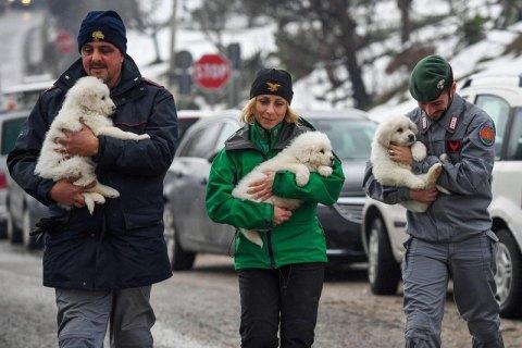 Из заваленного лавиной отеля в Италии вытащили трех щенков