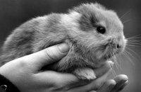 Безухий крольчонок стал жертвой неуклюжего оператора