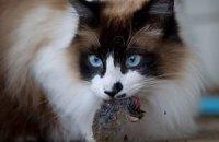 Кандидат в мэры Рима пообещал привезти в город полмиллиона кошек