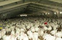 Птицеводство в Украине не сводится к одной компании, - бизнесмен