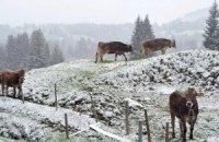 Карпаты засыпало снегом: спасатели искали двух туристов