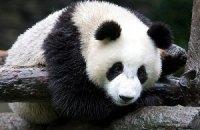 Пятничная панда #111
