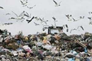 Местные жители заблокировали городскую свалку Львова