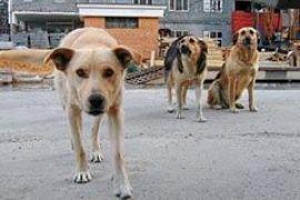 Телеоператора Первого канала загрызла стая собак