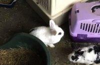 В Дании в однокомнатной квартире зоозащитники обнаружили 46 кроликов