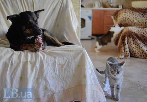 Коты не дружат с собаками? Нет, не слышали