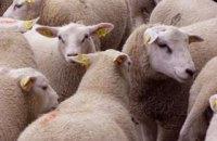 Через загибель овець у морському порту відкрили дві кримінальні справи
