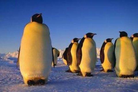 В Норвегии после карантина вакцинируют пингвинов, обитающих в аквариуме города Берген, - СМИ