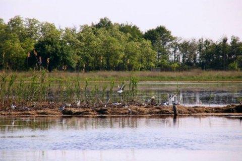 На Кінбурнській косі для гніздування рідкісних і зникаючих видів птахів побудовано штучний острів