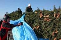 Ватикан установит елку из Украины 16 декабря