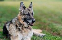 Байден повідомив про смерть однієї зі своїх собак