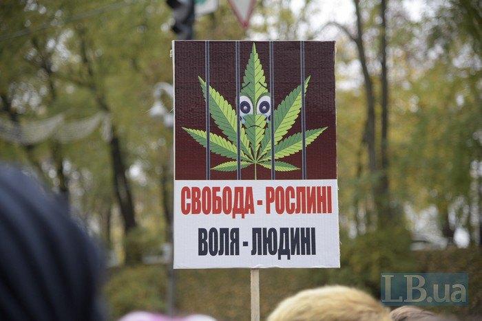 За легализацию марихуаны конопля законы в россии