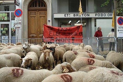 В Лионе протестующие фермеры вывели на центральную площадь 1500 овец