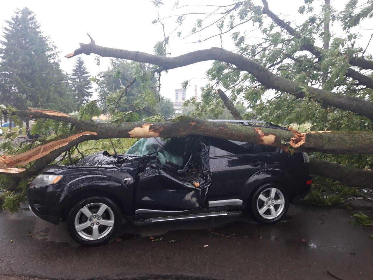 Через падіння дерева близько Стрия до лікарні потрапили двоє людей