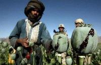 В Афганистане зафиксирован рекордный урожай опийного мака
