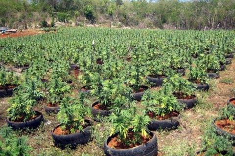 Милиция изъяла у двоих мариупольчан 3 кило марихуаны