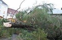 Дважды упавшую таллинскую елку решили укоротить