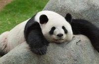 Пятничная панда #144