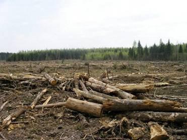У Чопі затримали прикордонників на контрабанді лісу
