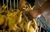 Украина запретила ввоз птицы из Китая