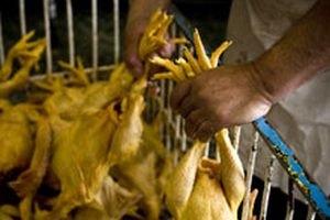 Україна заборонила ввезення птиці з Китаю