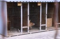 В Николаеве произошли столкновения из-за вероятного убийства 135 собак