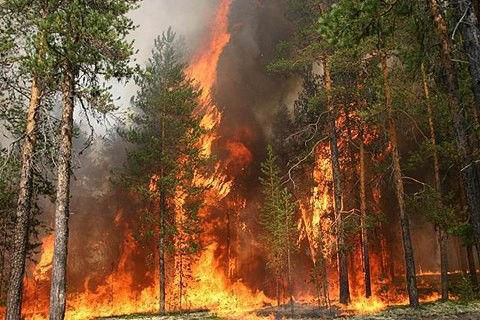 Площа лісової пожежі в Житомирській області зросла удвічі