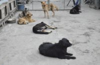 В Киеве во время локдауна животных из приюта будут бесплатно привозить домой новым хозяевам