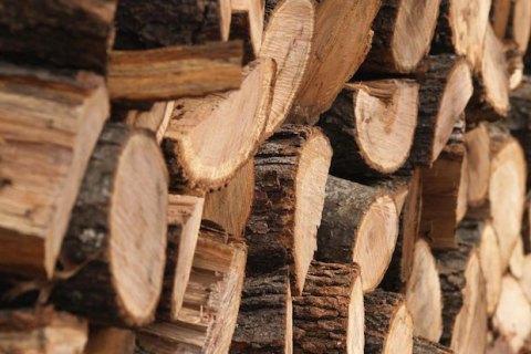 Австралия отказалась от вырубки дождевых лесов