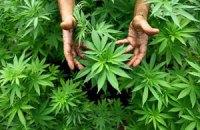 Влада Уругваю взялася за вирощування марихуани