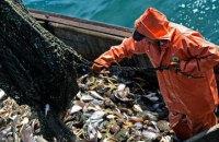 Україна погодила з Росією квоти на вилов риби в Азовському морі