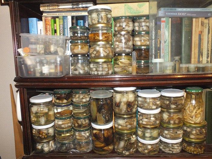 Частина заспиртованих колекцій Михайла Сона, вивезена додому, - водні макробезхребетні