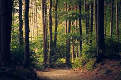 Беличанский лес: 12 лет борьбы