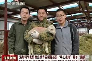 """Китайцы клонировали """"диетическую"""" овцу"""