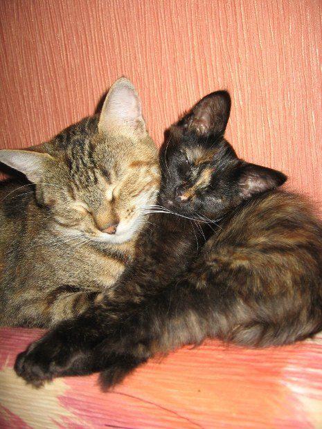 Малеча і її мама Дуся - від нашої читачки Марії