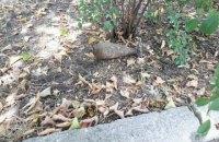 У Краматорську 12-річний хлопчик знайшов снаряд на дитячому майданчику