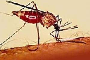 Работники авиакомпании завезли малярию, игнорируя медосмотр