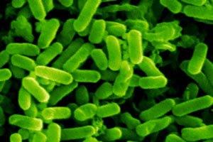 В Германии в результате отравления овощами умерли 9 человек