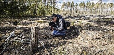 У тіні лісу. Як в Україні шукають вирубки за допомогою супутників