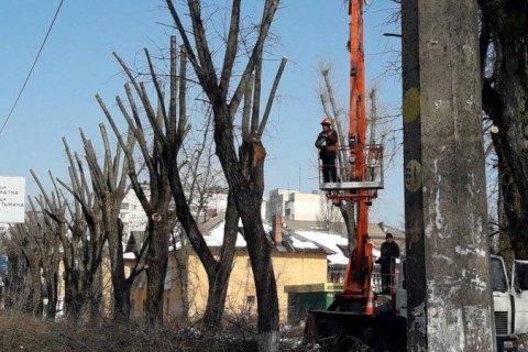 Киевсовет запретил кронирование деревьев