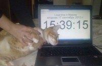 У жительницы Москвы украли кота и потребовали выкуп