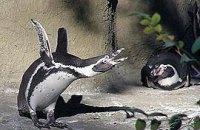 В Киевском зоопарке сдохли три пингвина