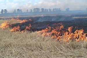 Под лесом в Киеве горит сухая трава и камыш