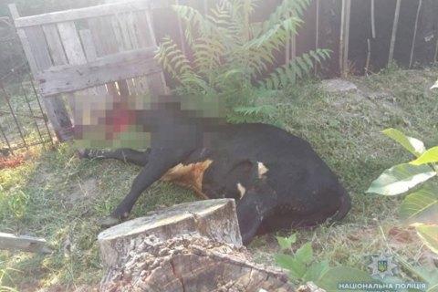 Бешеный бык напал на людей в Николаевской области