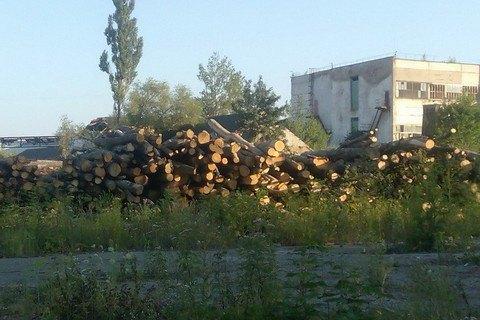 П'ять держлісгоспів Буковини попалися на нелегальному експорті деревини