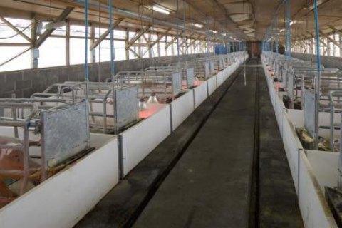 Через африканську чуму у Львівській області забили 102 тис. свиней