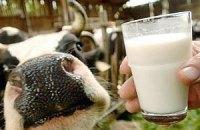 Коли українські корови почнуть давати європейське молоко